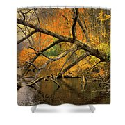 Fall Scene Shower Curtain