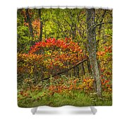Fall Sumac Trees With Red Leaves In A Michigan Forest During Autumn Shower Curtain
