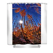 Fall Sun And Trees Shower Curtain