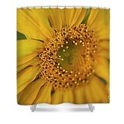 Fall Sunflower Avila, Ca Shower Curtain