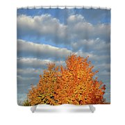 Fall Sunrise On Sugar Maple Along Route 31 Shower Curtain