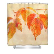 Fall Together Shower Curtain