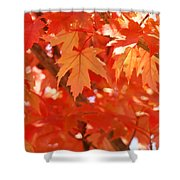 Fall Tree Art Autumn Leaves Red Orange Baslee Troutman Shower Curtain