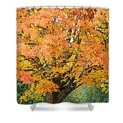 Fall Tree Art Print Autumn Leaves Shower Curtain