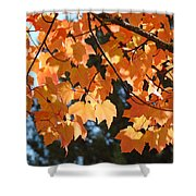 Fall Tree Art Prints Orange Autumn Leaves Baslee Troutman Shower Curtain
