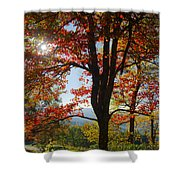 Fall Tree Colors I Shower Curtain