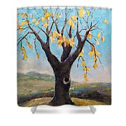 Fall Tree In Virginia Shower Curtain by Becky Kim