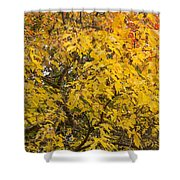 Fall Tree Leaves 2 Shower Curtain