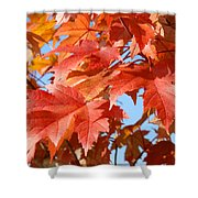 Fall Tree Leaves Art Prints Blue Sky Autumn Baslee Troutman Shower Curtain