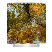Fall Tree Tops Shower Curtain