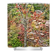 Fall Tree With Intense Colors Shower Curtain