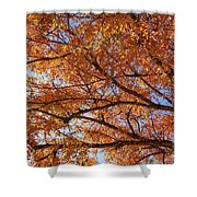 Fall Tree With Star Burst Shower Curtain