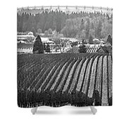 Vineyard In Black And White Shower Curtain
