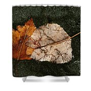 Fallen Leaves On Frozen Water Shower Curtain