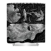 Fallen Leaves Revisited Shower Curtain