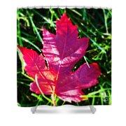 Fallen Maple Leaf Shower Curtain