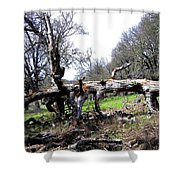 Fallen Mighty Oak Shower Curtain