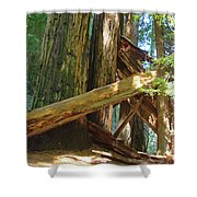 Fallen Redwood Trees Forest Shower Curtain