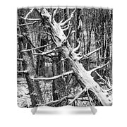 Fallen Tree And Snow Shower Curtain