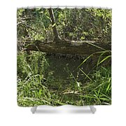 Fallen Tree In Peters Canyon Shower Curtain