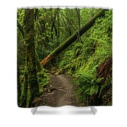 Fallen Tree On The Trail Shower Curtain