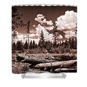 Fallen Trees Shower Curtain