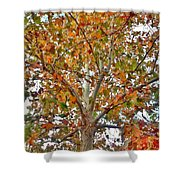 Falling Into Fall Shower Curtain