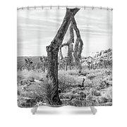 Falling Joshua Tree Branch Shower Curtain
