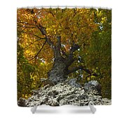 Falling Tree Shower Curtain