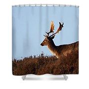 Fallow Buck Shower Curtain