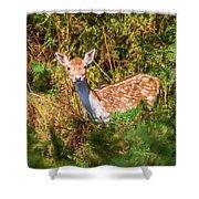 Fallow Deer 2 Shower Curtain