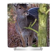 Fallow Deer Fawn Shower Curtain