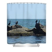 Falmouth  Shower Curtain
