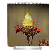 False Dotted Border Butterfly Shower Curtain