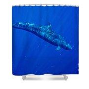 False Killer Whale Shower Curtain