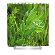 False Solomon Seal Shower Curtain