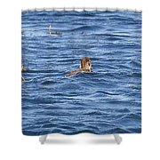 Family Geese Shower Curtain
