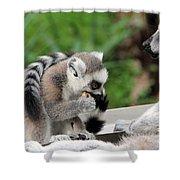 Family Of Lemurs Shower Curtain