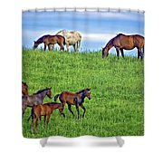 Family Picnic Shower Curtain