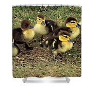 Family Portrait Shower Curtain by Angelina Vick