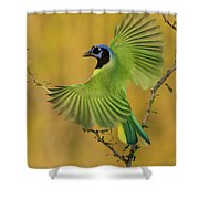 Fan Dancer Shower Curtain