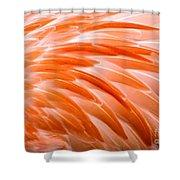 Fan Of Feathers Shower Curtain