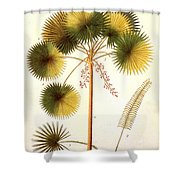 Fan Palm Shower Curtain