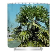 Fan Palm Tree Shower Curtain