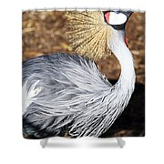 Fancy Feathers Shower Curtain