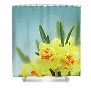 Fancy Spring Narcissus Garden  Shower Curtain