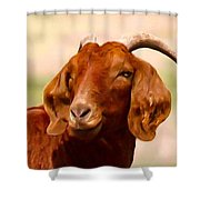 Fancy The Red Goat Shower Curtain