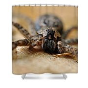 Spider Close Up Shower Curtain