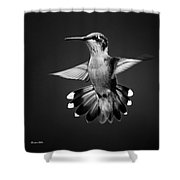 Fantail Hummingbird Square Bw Shower Curtain