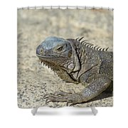Fantastic Gray Iguana With Spines Along His Back Shower Curtain